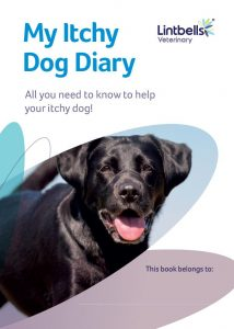 Itchy Dog Diary